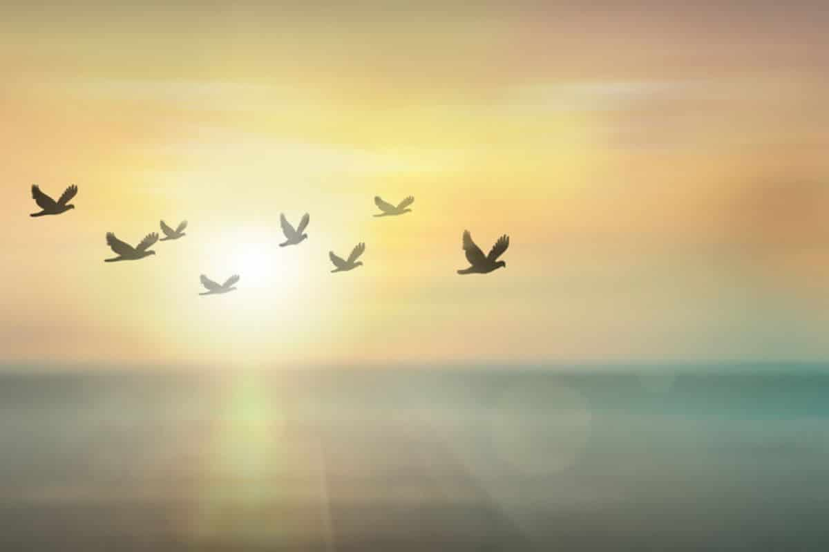 Serenity in addiction recovery