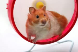 Hamster wheel of addiction